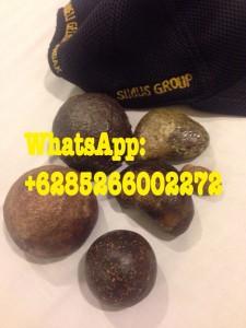 Batu Geliga Landak Asli